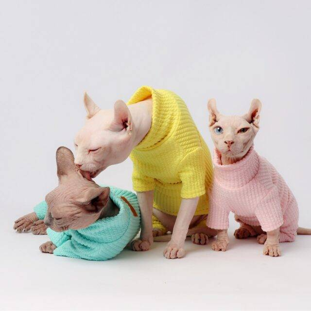 Colorful Elastic Clothes for Cat Clothes For Cats Color : Black